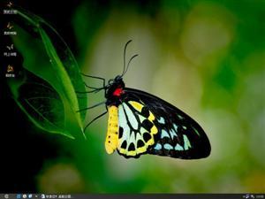 蝴蝶电脑主题