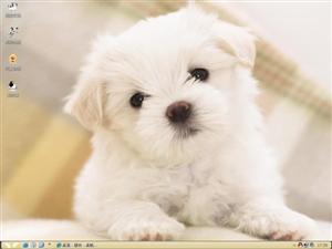 可爱狗狗电脑主题