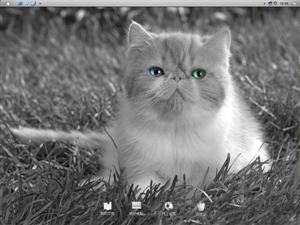 小猫咪电脑主题