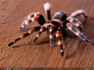 蜘蛛电脑主题