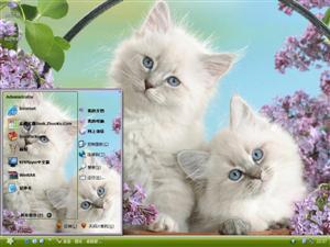 金吉拉猫电脑主题
