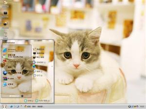 我的猫咪电脑主题
