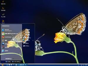 漂亮蝴蝶电脑主题