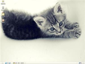 懒睡小猫咪电脑主题