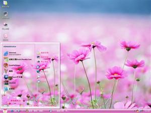 漂亮鲜花电脑主题