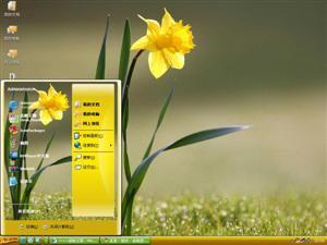 绽放的花朵电脑主题