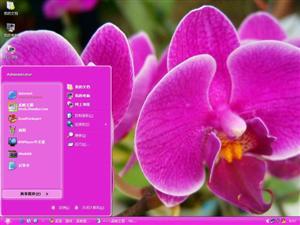 蝴蝶兰电脑主题