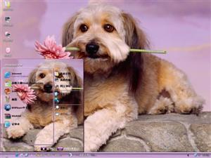 宠物狗电脑主题