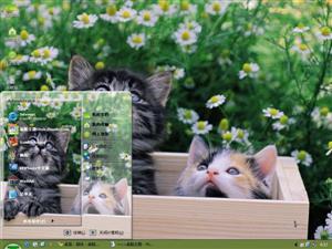 可爱小猫猫电脑主题