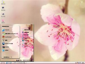 桃花朵朵开电脑主题