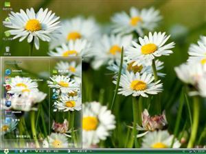 美丽的菊花电脑主题