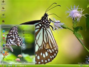 蝴蝶微距摄影电脑主题