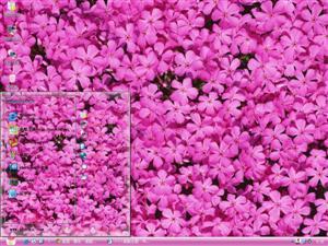 单反花朵摄影电脑主题