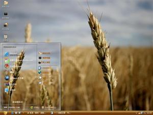 小麦风景风光电脑主题