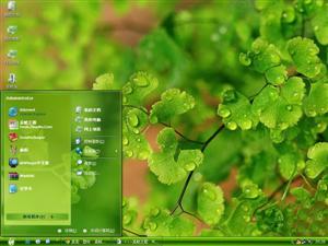 铁线蕨植物电脑主题