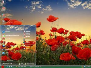 美丽罂粟花电脑主题