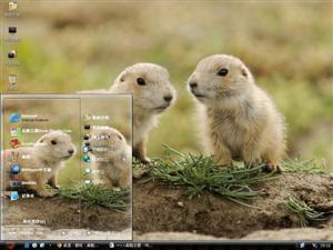 可爱土拨鼠电脑主题
