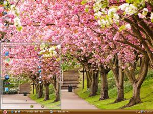樱花树下的小路电脑主题