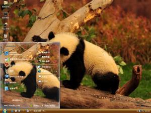 熊猫写真电脑主题
