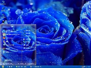 美丽蓝玫瑰电脑主题