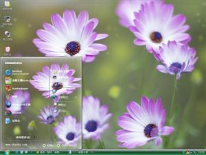 紫色小雏菊电脑主题