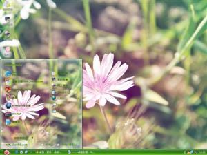 小清新花卉电脑主题