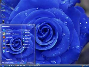 蓝色玫瑰花电脑主题