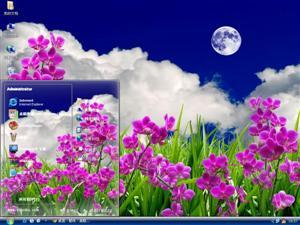 美丽蝴蝶兰电脑主题